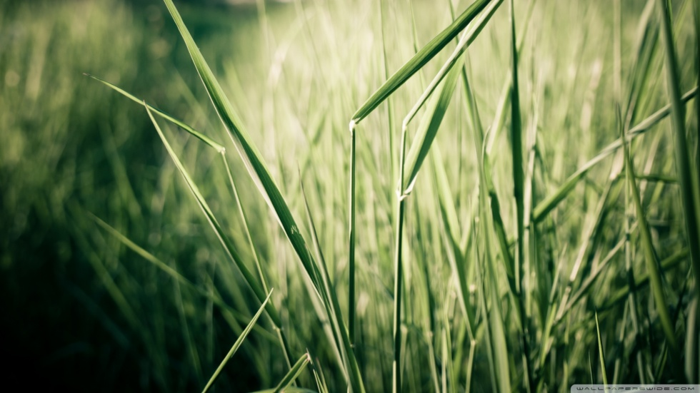 grass-stems-close-up_00445831